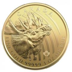 2019 1 oz Canadian Gold Moose Coin BU - .99999 in Assay